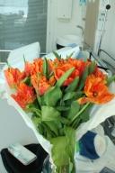 Världens vackraste tulpaner från maken.